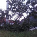 Odlomio se dio stabla u Turbetu starog preko 400 godina